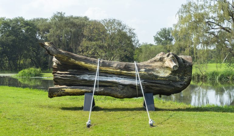 marco miehling nirox foundation sculpture park a tree is a big plant with a stick up in the middle 2019