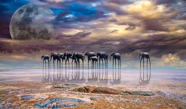Africa Photo Award Winners Announced