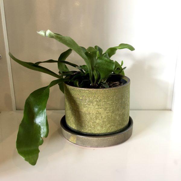 Ceramic Planter   Moss