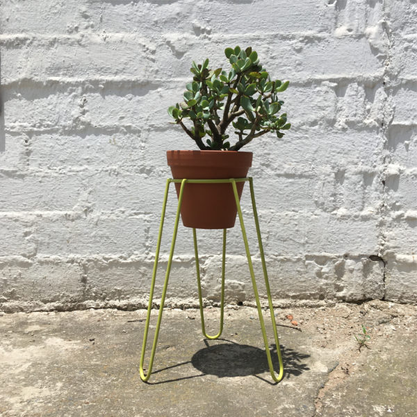 Lime Plant Stand Short